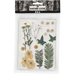 Gedroogde bloemen en bladeren 19 stuks wit