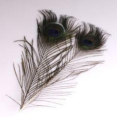 Krea Feathers pluim pauw 25-30 cm 2 stuks