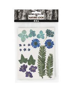 Gedroogde bloemen en bladeren 19 stuks blauw